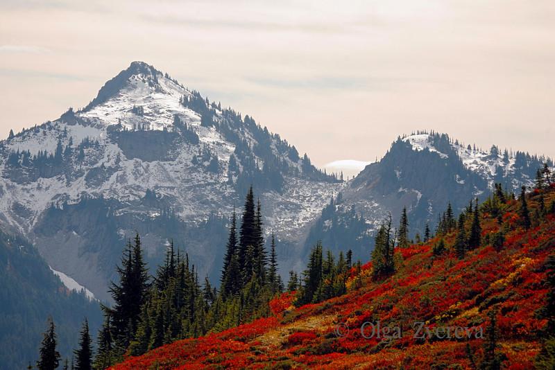 <p>Autumn at Mount Rainier National Park, Washington, USA</p>
