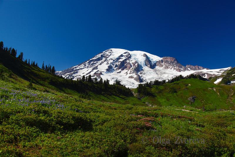 <p>Paradise, Mount Rainier National Park, Washington, USA</p>