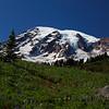 <p>Flower season at Paradise. Mount Rainier National Park, Washington, USA</p>