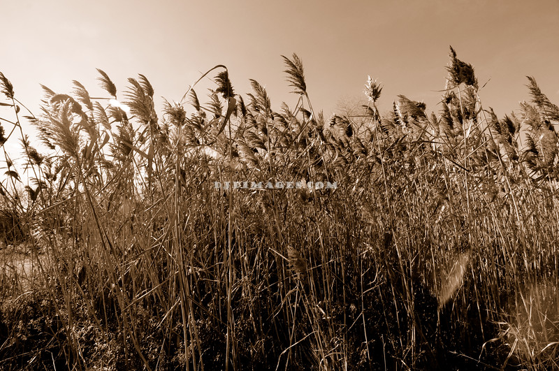 Wind and Fall Grass