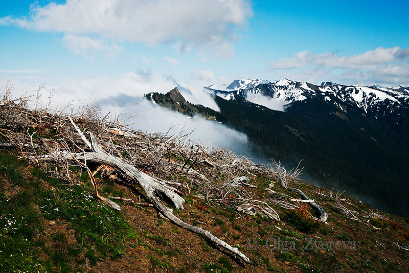 <p>View from Hurricane Ridge. Olympic National Park, Washington, USA</p>