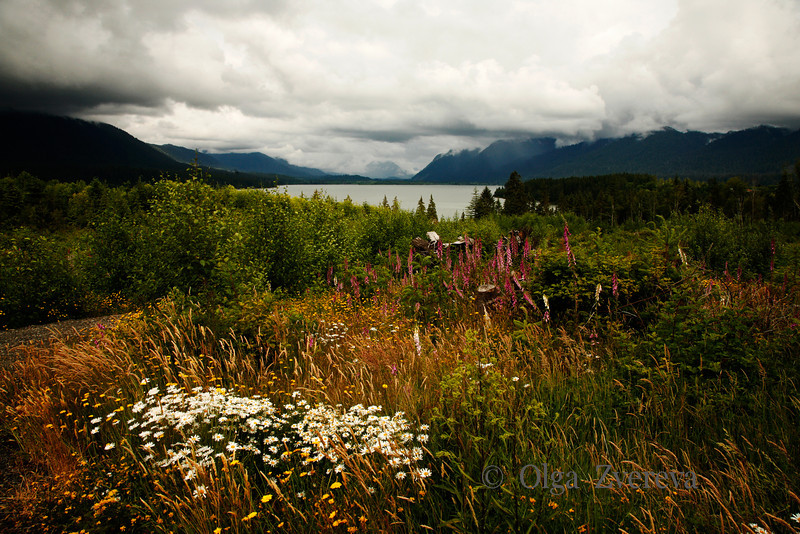 <p>Lake Quinault at Rainy Day. Olympic National Park, Washington, USA</p>