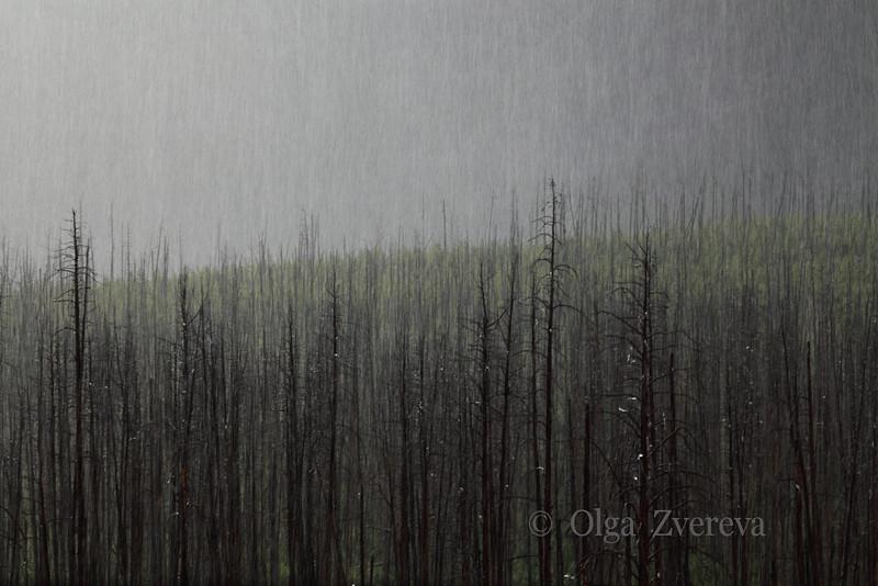 <p>Snowing at Yellowstone National Park, USA</p>