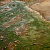 <p>Green Flow, Norris Geyser Basin, Yellowstone National Park, USA</p>