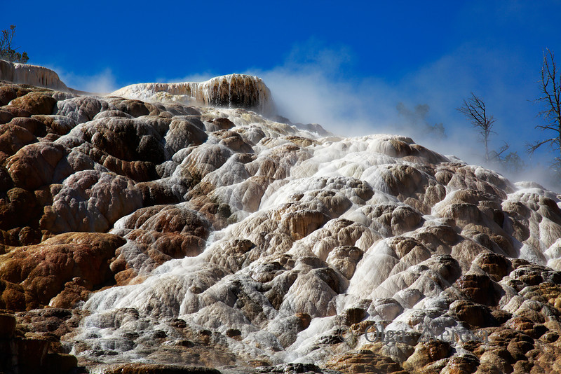 <p>Palette Spring, Mammoth Hot Spring area, Yellowstone National Park, USA</p>