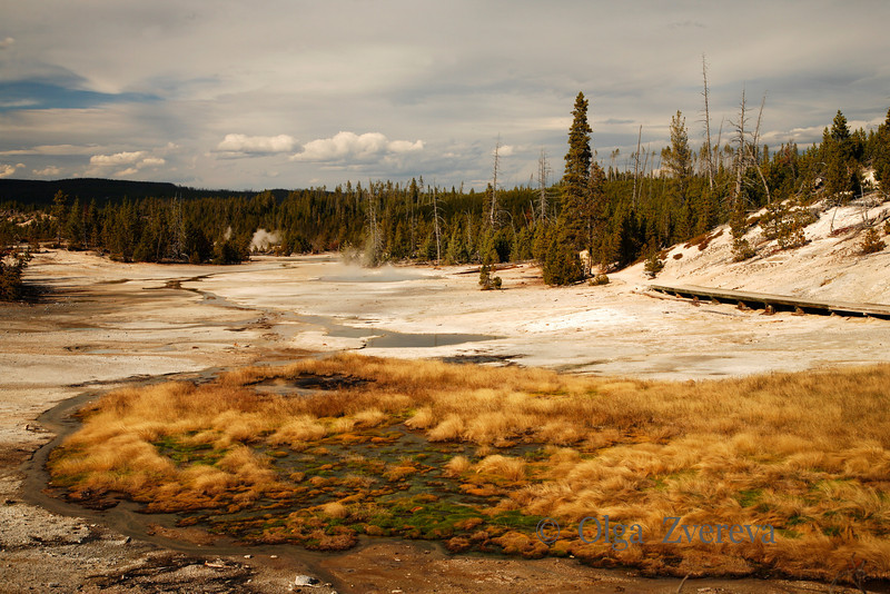 <p>Green Island, Norris Geyser Basin, Yellowstone National Park, USA</p>