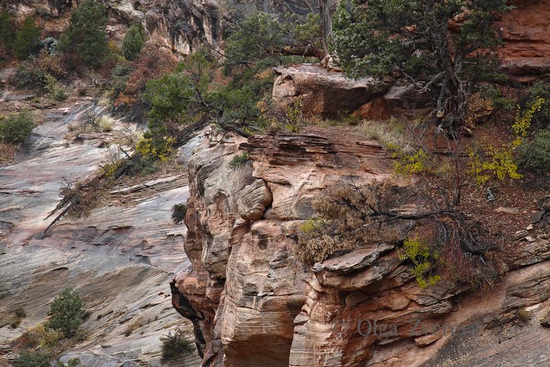 <p>Zion National Park, Utah, USA</p>