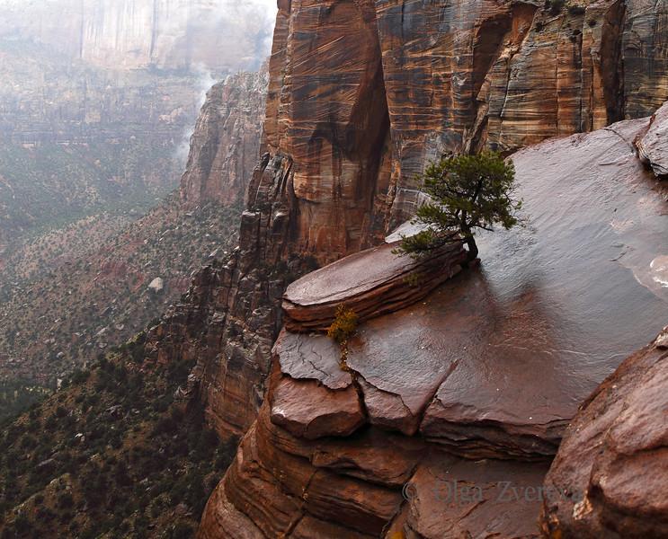 <p>Rainy day at Zion National Park, Utah, USA</p>