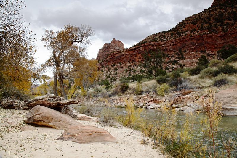 <p>Virgin River, Zion National Park, Utah, USA</p>