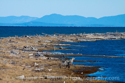 Part of the Dungeness Spit.  Photo taken from the viewpoint on the trail leading to the Dungeness Spit at Dungeness National Wildlife Refuge in Washington.