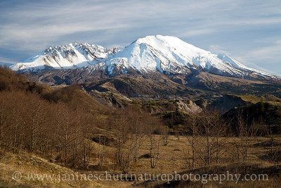 View of Mt. St. Helens from the Boundary Trail on a warm winter day in February 2015.