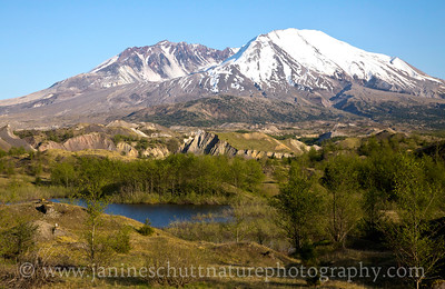 View of Mt. St. Helens from the Hummocks/Boundary Trail Junction.  Photo taken in May 2015.