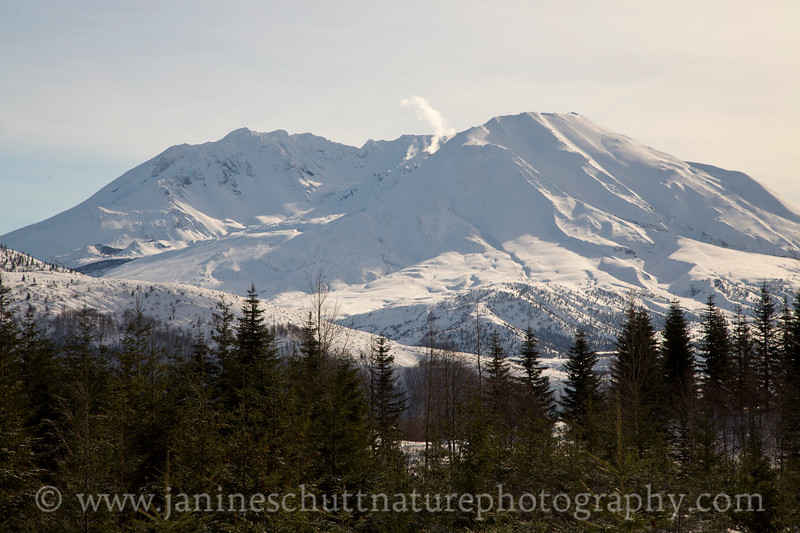 Steam ascends from the dome in the crater of Mt. St. Helens.  Photo taken from SR 504 in December 2016.