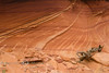 Flowing Sandstone in the Coyote Buttes South Landscape - Utah - Photo by Cindy Bonish