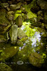 Beauty in the Reflections - Devils Den State Park, Arkansas