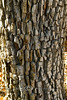 Wild Bark on a Tree we spotted at El Morro National Monument