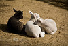 2 week old babies sleeping in the afternoon sunshine - Middleton Place Plantation