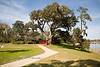 Check out the size of the Middleton Oak Tree - That Red arrow is to show you where Pat is - Photo by Cindy Bonish