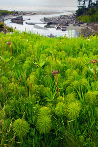 Horsetails Kalaloch Creek Kalaloch Lodge WA_8808