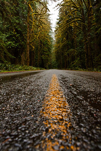 Rainforest road_8360