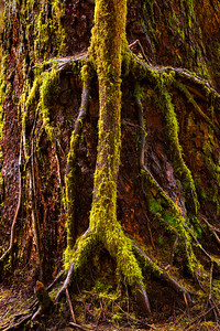 Tree in Tree_8465