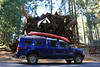 Look at the root ball of this downed Sequoia, it makes our truck look like a Tonka Toy
