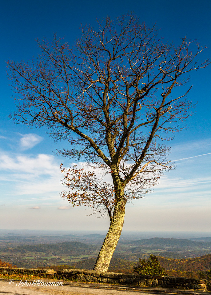 Beautiful Tree - Hazel Mountain Overlook, SNP
