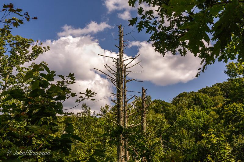 Dead Tree - Path between Big Meadows & Dark Hollow Falls