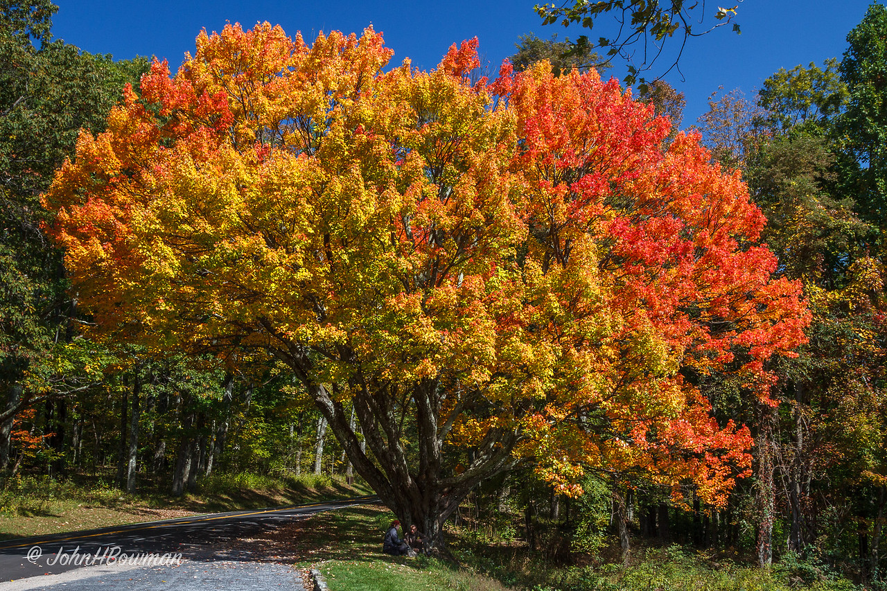 Landmark Maple at South River Overlook