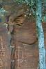 Petroglyphs hidden behind the trees - V Bar V Ranch Heritage Site, Arizona