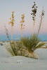 Lone Yucca in White Sands National Monument