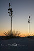 Soaptree Yucca during Sunset in White Sands National Monument