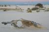 Abandonded Drift wood on White Sands