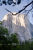 ElCapitan in Yosemite National Park - Photo by Cindy Bonish