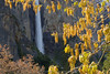 Oak Catkins and Bridalveil Fall.