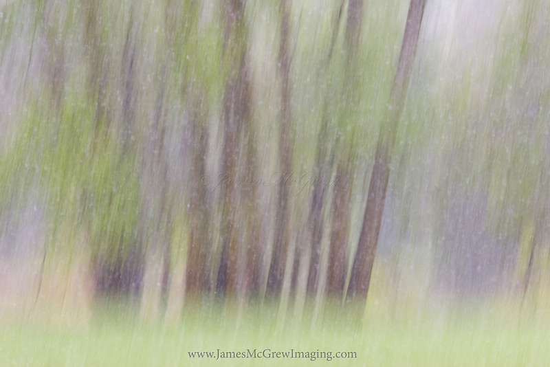 Impressions of a Spring Snowstorm.  ©2011  James McGrew