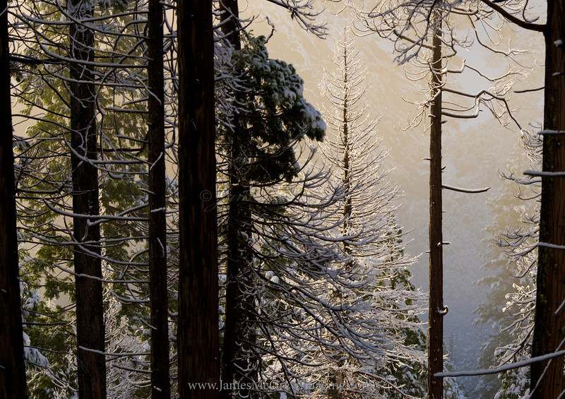 Stories in the Forest.  ©2011, James McGrew