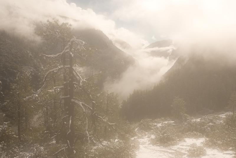 Dreamy Morning Snow.  ©2011, James McGrew