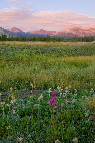 Most high country excursions start in Tuolumne Meadows.   Mts. Dana, Gibbs, and Mammoth Peak mark the skyline.