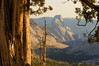 Half Dome Through the Junipers above Tenaya Canyon.<br /> <br /> 12x18 Limited edition of 75.  Print only: $180.  Matted to 18x24: $260