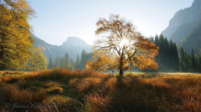 Half Dome and Elm in Cook's Meadow.  Copyright, ©2005  James McGrew