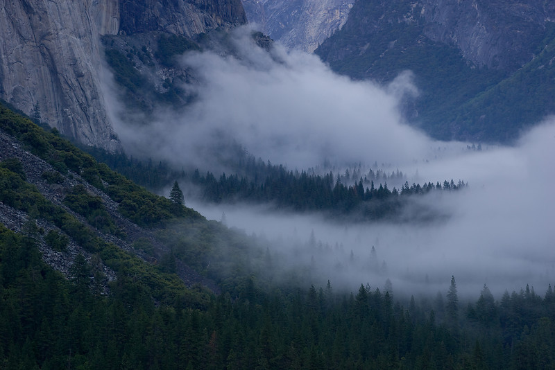 Lone Pine and Fog.