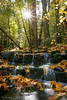 Fern Spring, October.  Copyright, ©2006  James McGrew<br /> Limited editions:  18x12 and 36x24