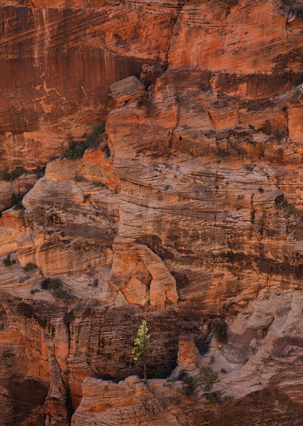 Touching the light: Solitary tree and reflected light on sandstone.