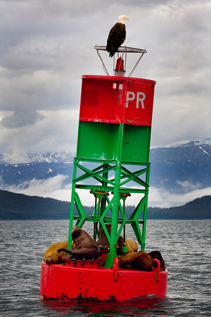 Sea lions along the Alaskan Marine Highway