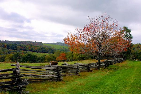 Tree and Fence, Blue Ridge Parkway just north of Mabry Mill, Virginia