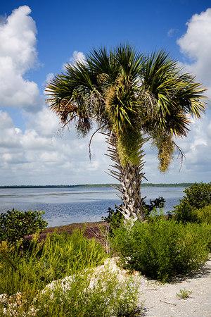 Scene along the Shilo Marsh Road in the Merritt Island National Wildlife Refuge on Merritt Island, Florida.
