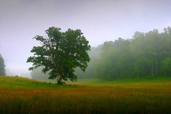 Tree and pasture in Cades Cove, Great Smoky Mountains National Park, Tennessee