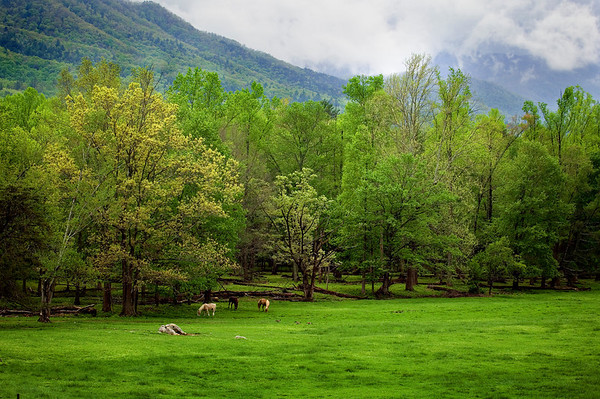 Horses in the pasture at Cades Cove, Great Smoky Mountains National Park, Tennessee