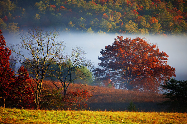2013 Fall colors in Cades Cove in the Great Smoky Mountains National Park.